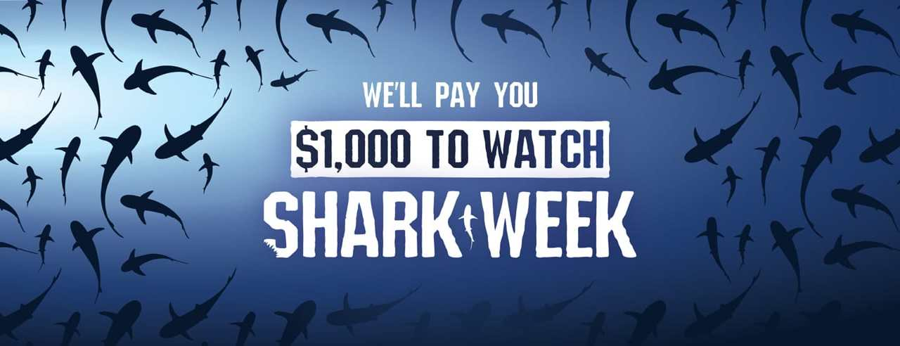 Get Paid $1,000 for Watching Shark Week