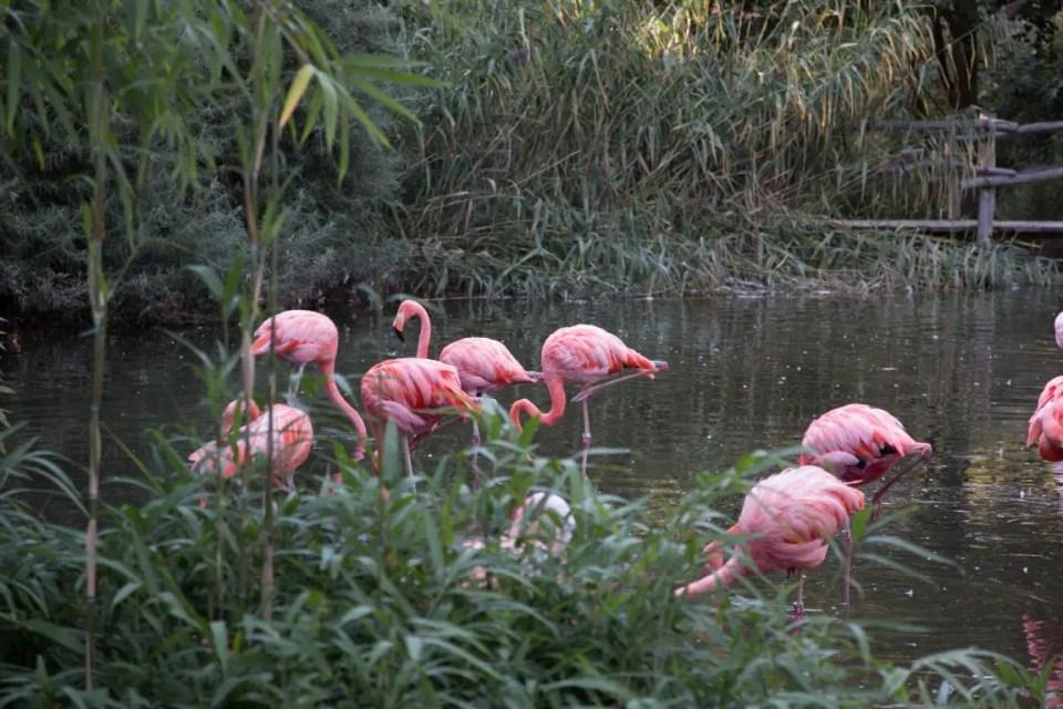 Prager Zoo - Der wahrscheinlich schönste Zoo in Europa