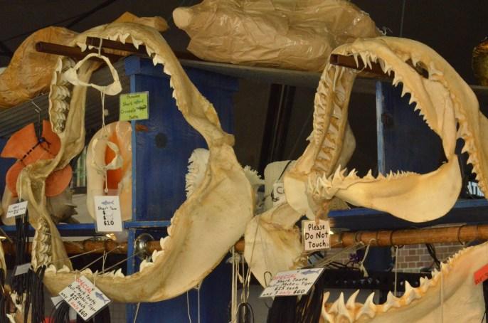 mandíbulas de tiburon