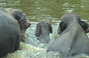 Baño en Familia