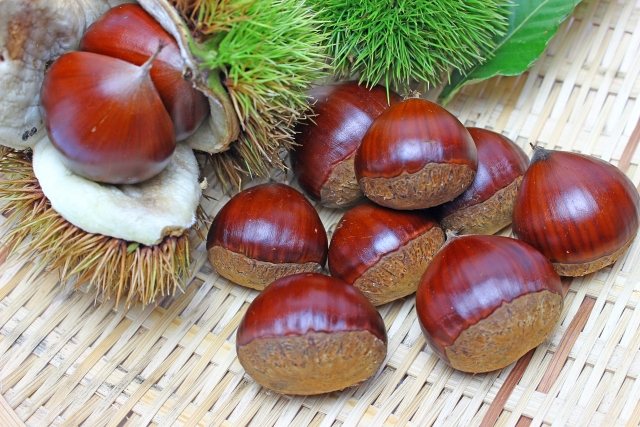 How about enjoying autumn in Japan, how about picking up chestnuts?