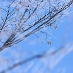 氷点下とはマイナス何度?零下との違いは何?表現として適切なのは?