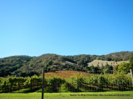 vineyard on Franklin Canyon Rd
