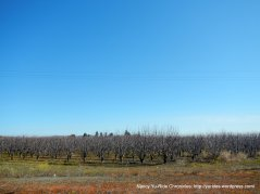 orchards along Suisun Pkwy