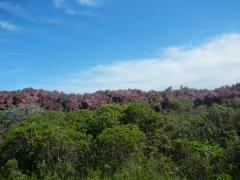 Mt Tam flora