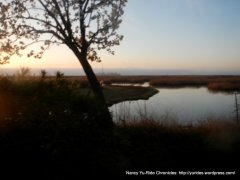 sloughs and marshes