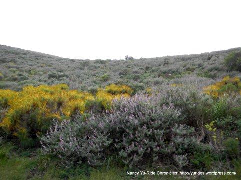 flowered slopes