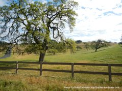 green meadows with oaks