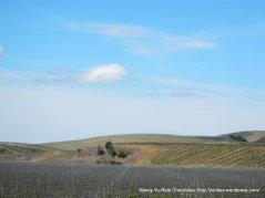 Los Alamos vineyards