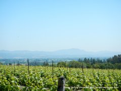 view of Sonoma Mtns