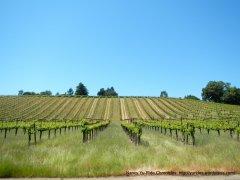 vineyards on Westside