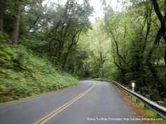 along Redwood Creek