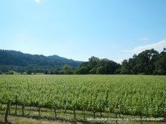 St Helena vineyards