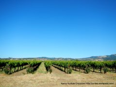 vineyards on Abernathy