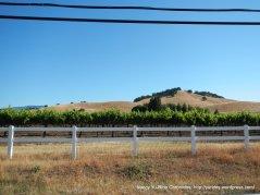 vineyards on Mankas