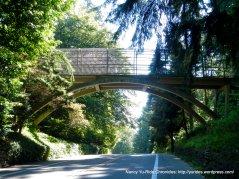 Forest Park overpass
