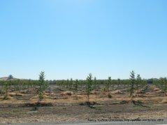 new growth orchard