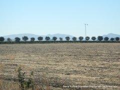 Abernathy fields