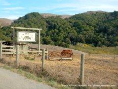 Black Mountain Ranch