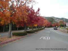 fall colors-Miller Creek