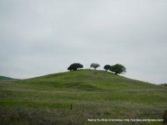 beautiful green hills