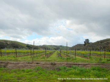 Sisquoc vineyards