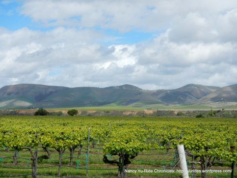 Foxen Canyon vineyards