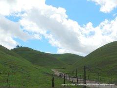 green Solomon Hills