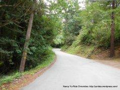 Old La Honda-winding thru the woods
