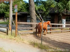 horse ranch-Woodside Rd