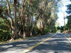 Vine Hill Way