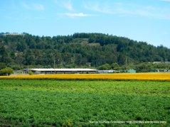 agricultural farm lands