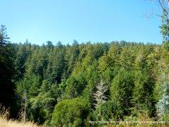 denmse forest around sam mcdonald park