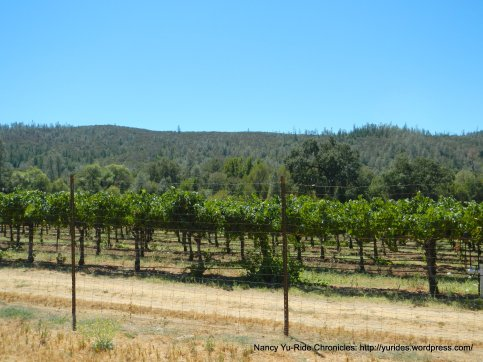 chiles valley vineyard