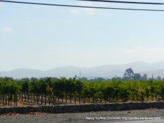 livermore valley