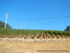 hillside vines