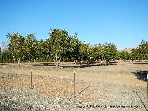 camino tassajara orchard
