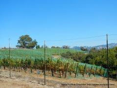 hauser bridge rd vineyard