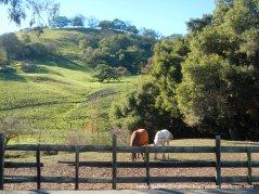 san felipe rd ranch