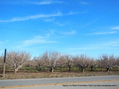 san juan valley orchards