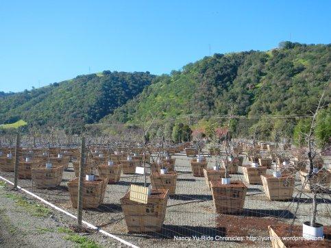 calaveras rd tree nursery