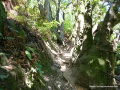 lower packrat trail