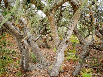 rose bowker grove