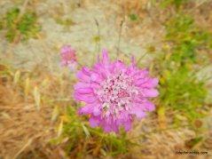 deep pink wildflowers