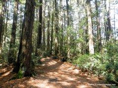 to redwood peak