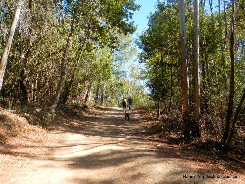 eucalyptus trail