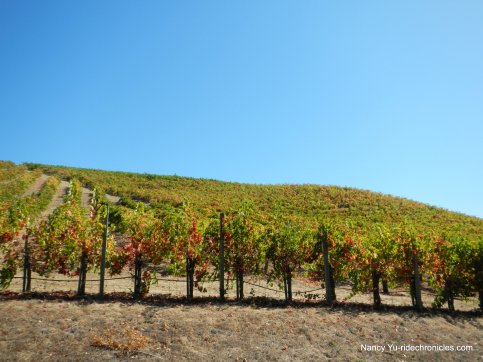 congress valley vineyards