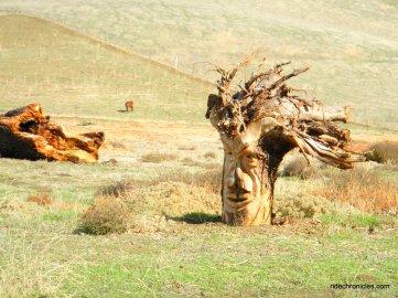 wood stump carvings