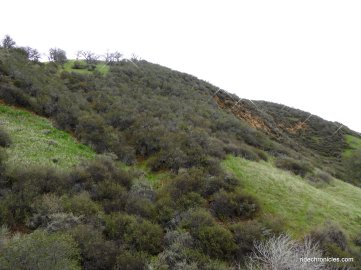 oil canyon
