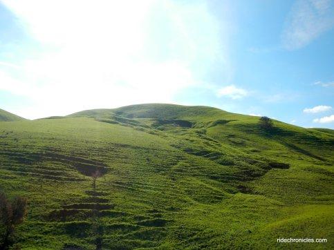 lark trail